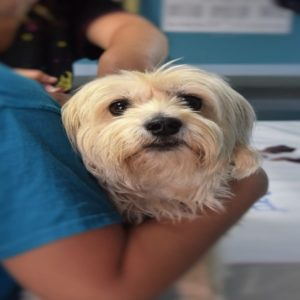 apprendere le tecniche e le procedure cliniche impiegate in veterinaria e nella cura degli animali