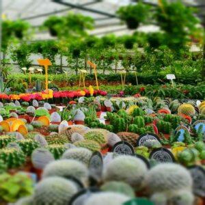 giardinaggio e vivaio
