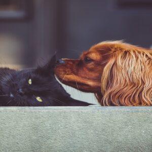 conoscere il gatto in tutte le sue varianti di razza e di comportamento