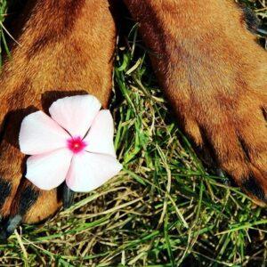 curare gli animali senza utilizzo di farmaci ma impiegando solo sostanze naturali